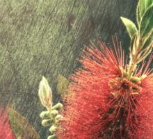Bottle Brush Plant Sticker