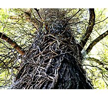 Twisted (in color) Photographic Print