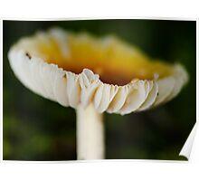 Ribbon Mushroom! Poster