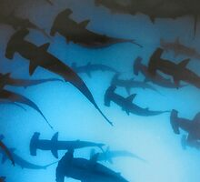 Hammerheads. by Anne Scantlebury