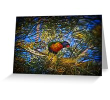 Colourful lorikeet in an equally colourful grevillea Greeting Card
