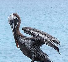 Brown pelican 2. by Anne Scantlebury