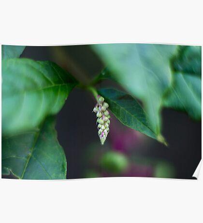 Budding Plant Life Poster