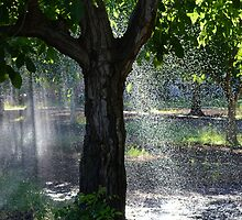 Spring Rain by BluePromises