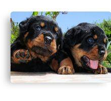 Two Rottweiler Puppies, High Five Canvas Print