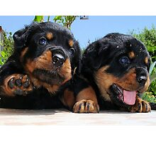 Two Rottweiler Puppies, High Five Photographic Print