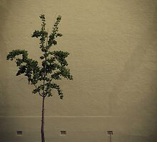 One little Tree by Amped