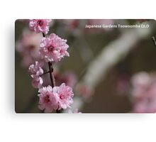 Cherry Blossom PC Canvas Print