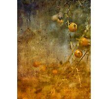 golden spring Photographic Print