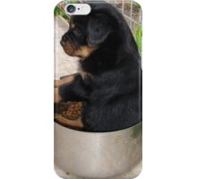 Rottweiler Puppy Sitting In A Bowl Of Food iPhone Case/Skin