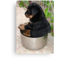 Rottweiler Puppy Sitting In A Bowl Of Food Canvas Print