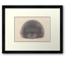 Black Pom puppy Framed Print