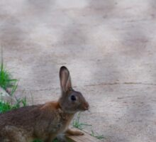 Rabbit through the fence Sticker