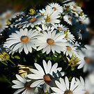 Spring Daises by waxyfrog