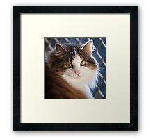 Who me ! Framed Print