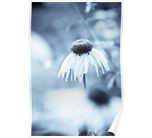 Blue fowers Poster