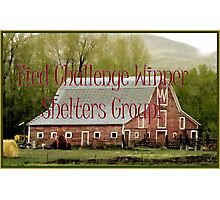 Banner - Shelters - Tied Challenge Winner Photographic Print