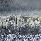 Ancient Forest by Kathie Nichols