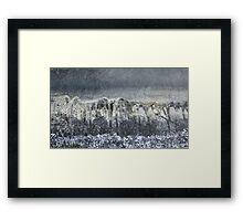Ancient Forest Framed Print