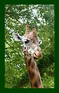 Giraffe .. iphone case  by LoneAngel