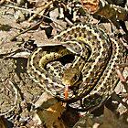 Juvenile Eastern Garter Snake - Thamnophis sirtalis by MotherNature