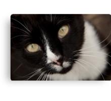 Kitty! Canvas Print