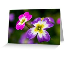Virginian Stock Greeting Card