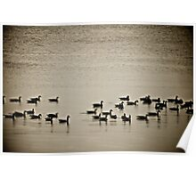Geese. Poster