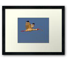 Sunset Ibis Framed Print