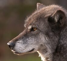 Profile of a Wolf by William C. Gladish