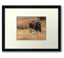 Not Yet!...Still Saying Goodbye Framed Print