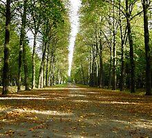 Endless Autumn road by João Figueiredo