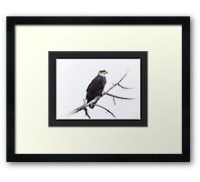 Lessons in Patience - American Bald Eagle Framed Print