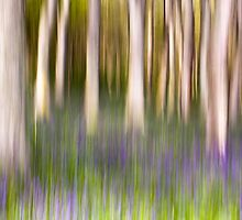 Bluebell Wood Abstract by cjdolfin