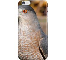 Coppers Hawk  iPhone Case/Skin