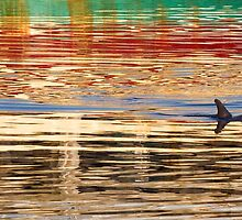 Colourful Dolphin Reflections by cjdolfin
