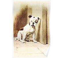 Cute Bulldog illustration Poster