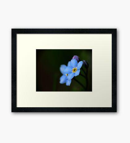 Forget-Me-Nots 10 Framed Print