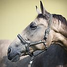 equus by Dan Shalloe