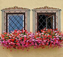 Flower Burst & Windows. by Lee d'Entremont