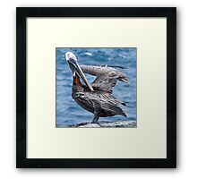 Brown pelican 4. Framed Print