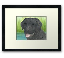Black Labrador Dog Art Portrait Canine Pet Lab Framed Print