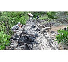 Photographing iguanas. Photographic Print