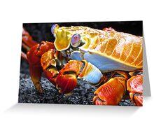 Sally lightfoot crab. Greeting Card