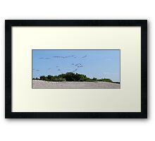 Flock. Framed Print