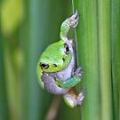 Angry Tree Frog by A. Kakuk