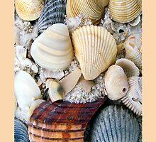 Pretty Seashells  by Eva Kato