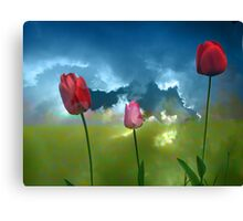 three tulip flowers in cloudy background Canvas Print