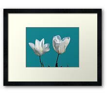 two white tulip flowers, floral photo art Framed Print