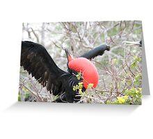 Frigate bird 1. Greeting Card